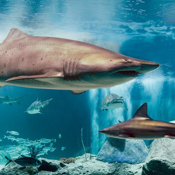 Aquarium Email Image